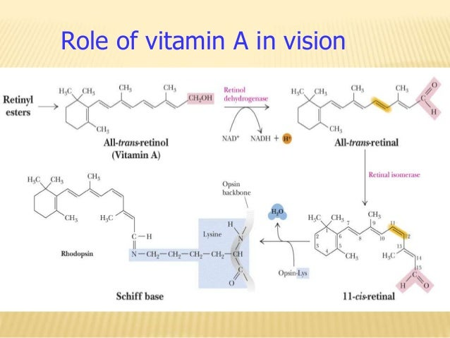 Immune System For Essentials Of Healthcare additionally Coenzyme Q10 Monograph besides Caffeine Metabolism together with Vital Proteins in addition Lipids. on body membranes
