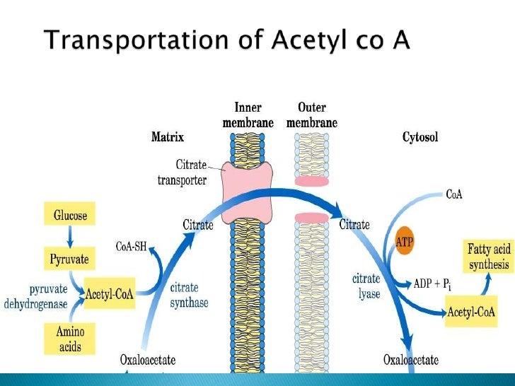 Fatty acid synthesis  Fatty acid synt...