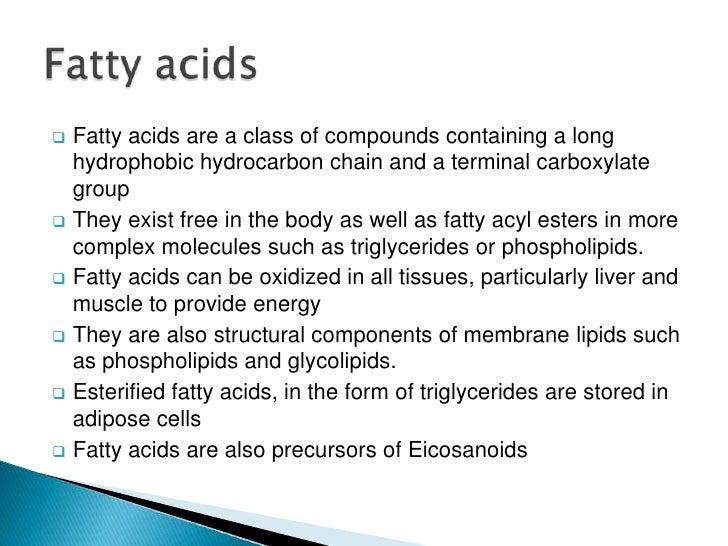 define lipids phospholipids and steroids