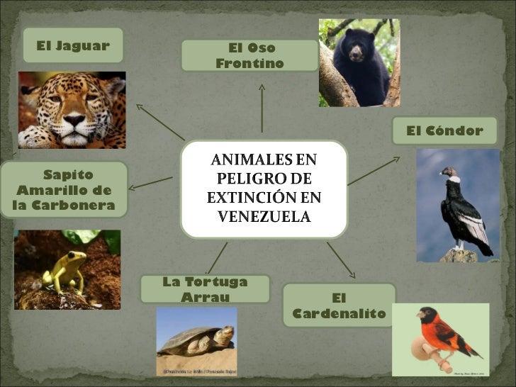 El Jaguar            El Oso                     Frontino                                              El Cóndor    Sapito ...
