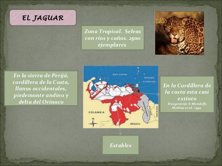 EL JAGUAR                          Zona Tropical. Selvas                          con ríos y caños. 2500                  ...