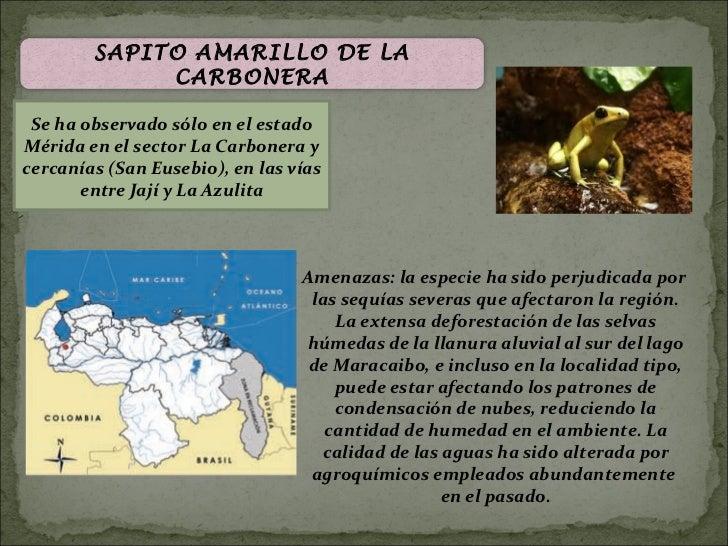 SAPITO AMARILLO DE LA             CARBONERA Se ha observado sólo en el estadoMérida en el sector La Carbonera ycercanías (...