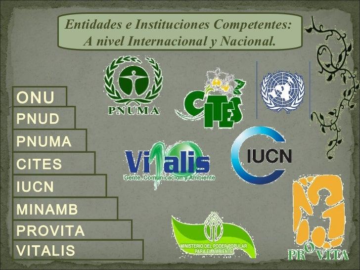 Entidades e Instituciones Competentes:          A nivel Internacional y Nacional.ONUPNUDPNUMACITESIUCNMINAMBPROVITAVITALIS