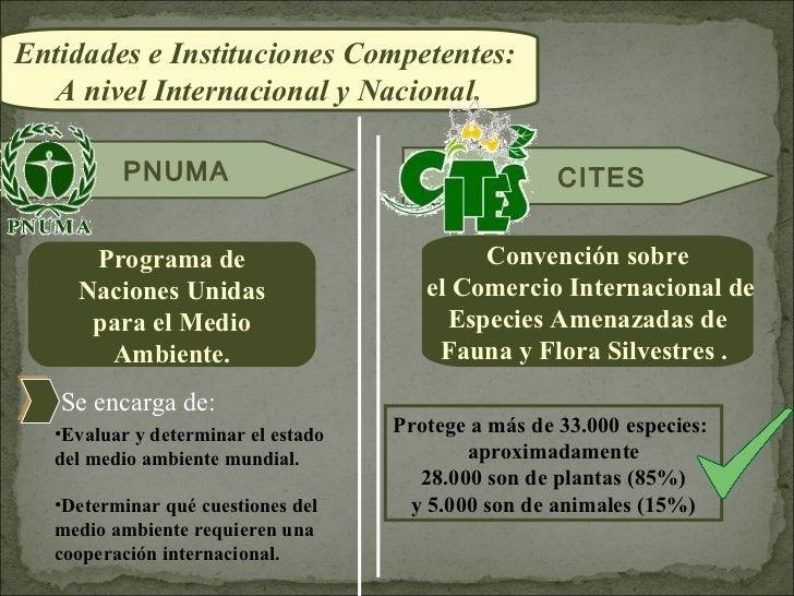 Entidades e Instituciones Competentes:  A nivel Internacional y Nacional.          PNUMA                                  ...