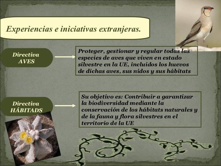 Experiencias e iniciativas extranjeras.                    Proteger, gestionar y regular todas las Directiva              ...