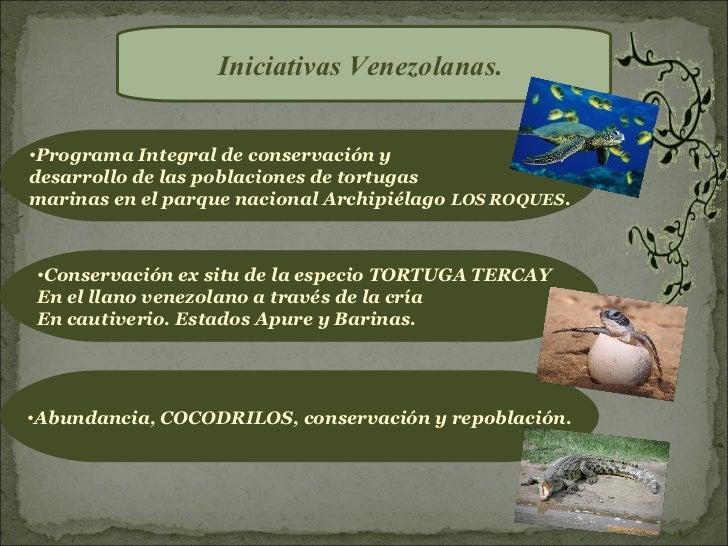 Iniciativas Venezolanas.•Programa Integral de conservación ydesarrollo de las poblaciones de tortugasmarinas en el parque ...
