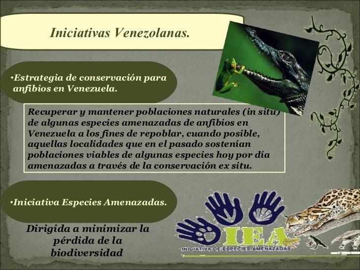 Iniciativas Venezolanas.•Estrategia de conservación para anfibios en Venezuela.   Recuperar y mantener poblaciones natural...