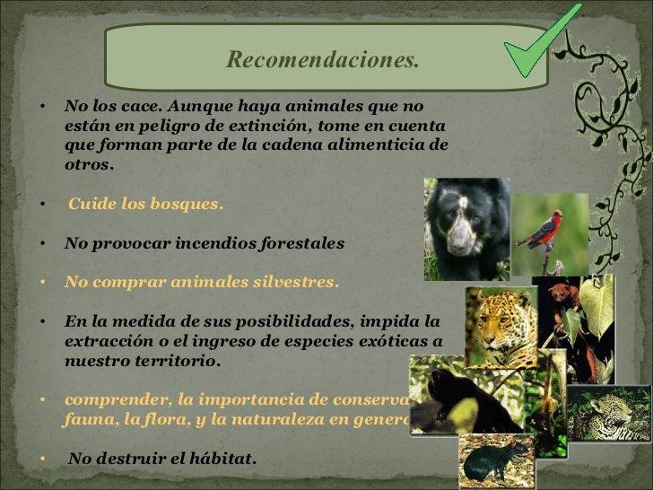 Recomendaciones.•   No los cace. Aunque haya animales que no    están en peligro de extinción, tome en cuenta    que forma...