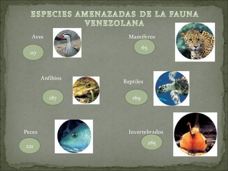 Aves               Mamíferos                            65  117        Anfibios                   Reptiles           187  ...