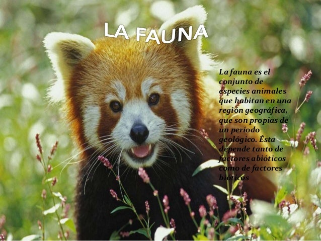 La fauna es el conjunto de especies animales que habitan en una región geográfica, que son propias de un período geológico...
