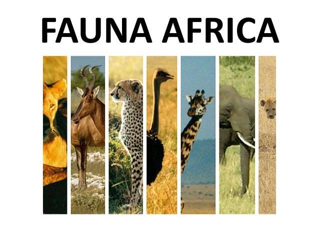 FAUNA AFRICA