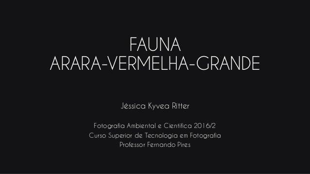 FAUNA ARARA-VERMELHA-GRANDE Jéssica Kyvea Ritter Fotografia Ambiental e Científica 2016/2 Curso Superior de Tecnologia em ...