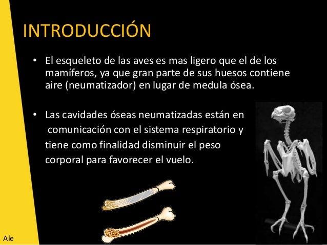 OSTEOLOGIA DE AVES EPUB