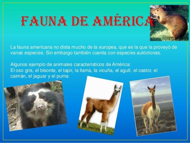 Fauna de américa La fauna americana no dista mucho de la europea, que es la que la proveyó de varias especies. Sin embargo...