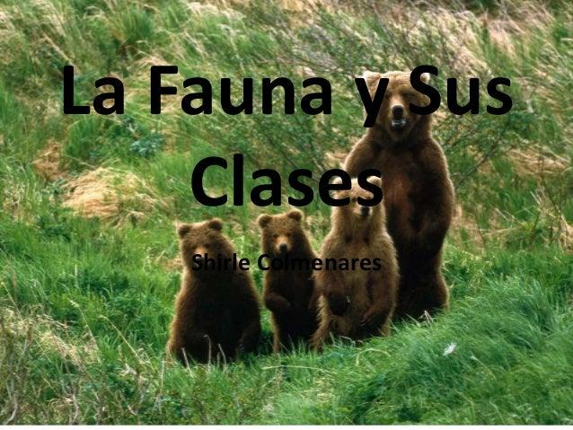 La Fauna y Sus Clases Shirle Colmenares