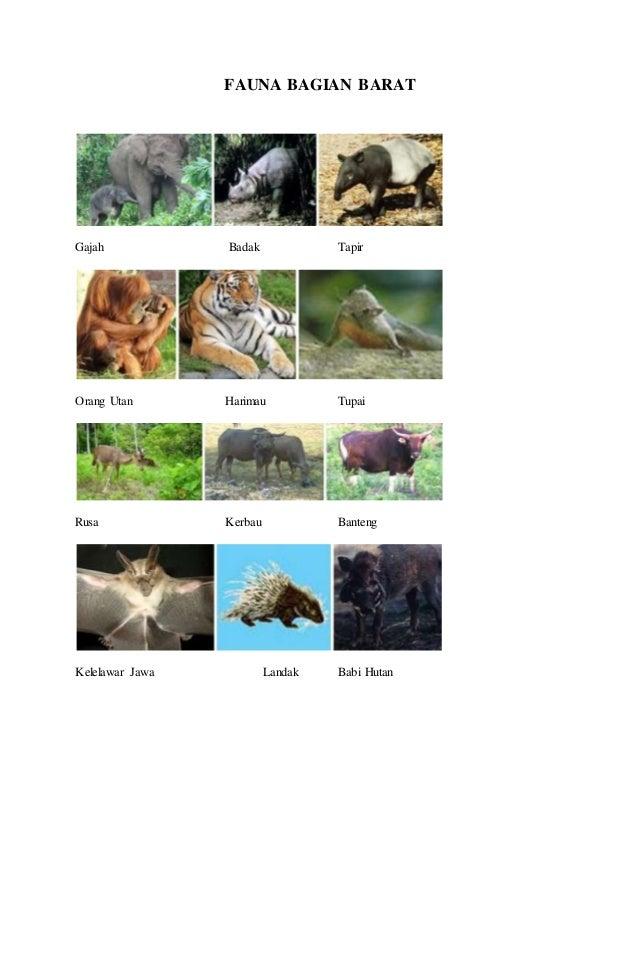Image Result For Cerita Orang Utan Dalam Bahasa Inggris