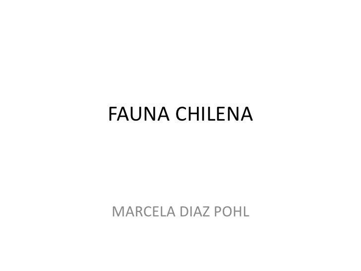 FAUNA CHILENAMARCELA DIAZ POHL