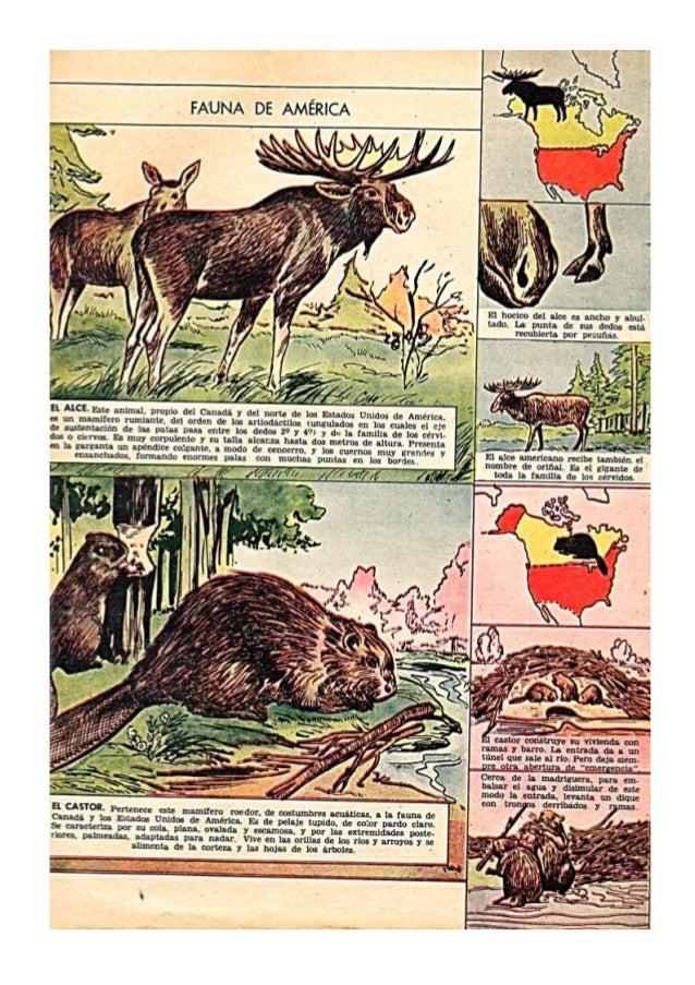 Fauna de Amèrica
