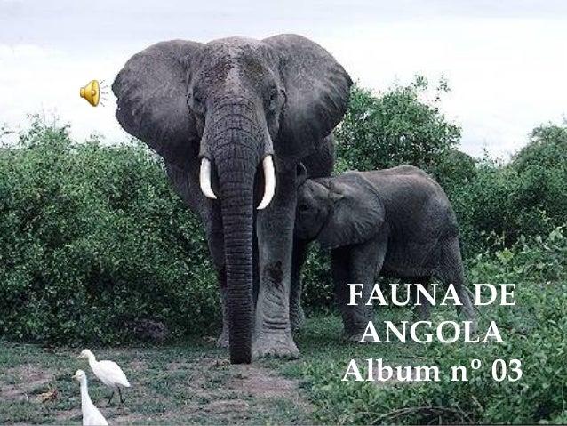 FAUNA DE ANGOLA Album nº 03
