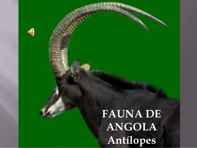 FAUNA DE ANGOLA Antílopes
