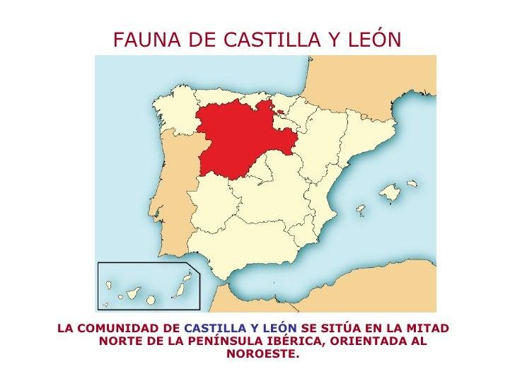 FAUNA DE CASTILLA Y LEÓN <ul><li>LA COMUNIDAD DE  CASTILLA Y LEÓN  SE SITÚA EN LA MITAD NORTE DE LA PENÍNSULA IBÉRICA, ORI...