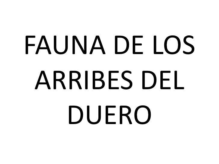 FAUNA DE LOS ARRIBES DEL   DUERO