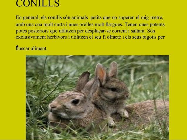 CONILLSEn general, els conills són animals petits que no superen el mig metre,amb una cua molt curta i unes orelles molt l...