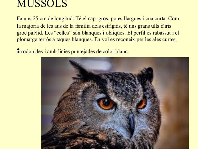 MUSSOLSFa uns 25 cm de longitud. Té el cap gros, potes llargues i cua curta. Comla majoria de les aus de la família dels e...