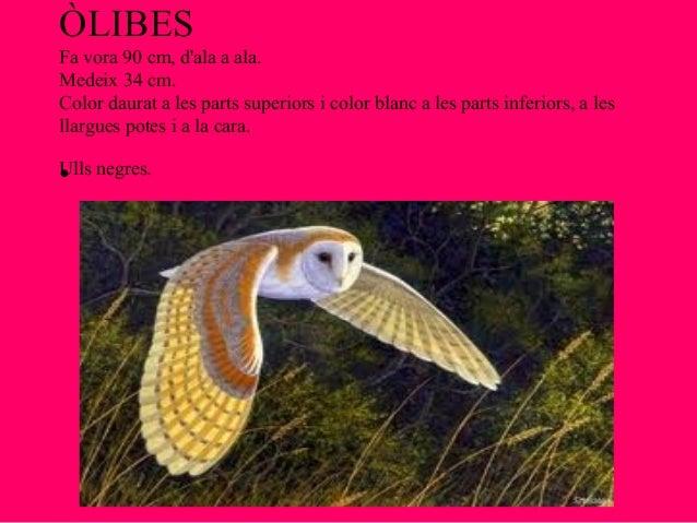 ÒLIBESFa vora 90 cm, dala a ala.Medeix 34 cm.Color daurat a les parts superiors i color blanc a les parts inferiors, a les...