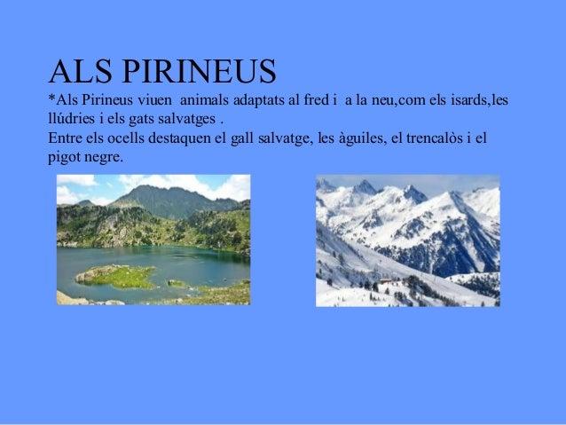 ALS PIRINEUS*Als Pirineus viuen animals adaptats al fred i a la neu,com els isards,lesllúdries i els gats salvatges .Entre...