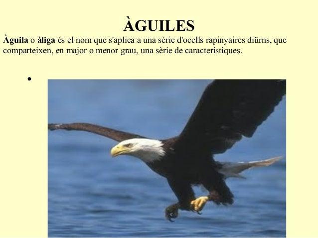 ÀGUILESÀguila o àliga és el nom que saplica a una sèrie docells rapinyaires diürns, quecomparteixen, en major o menor grau...