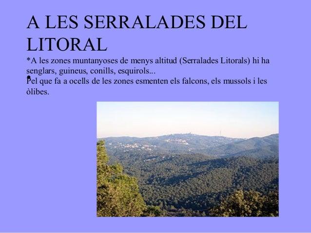 A LES SERRALADES DELLITORAL*A les zones muntanyoses de menys altitud (Serralades Litorals) hi hasenglars, guineus, conills...