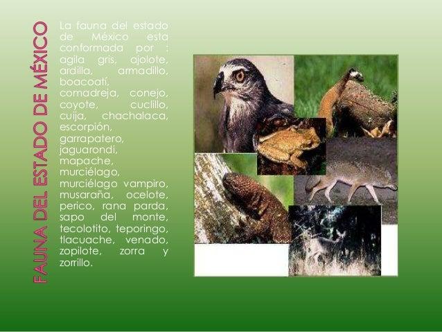 Zorra del edo de mexico - 4 5