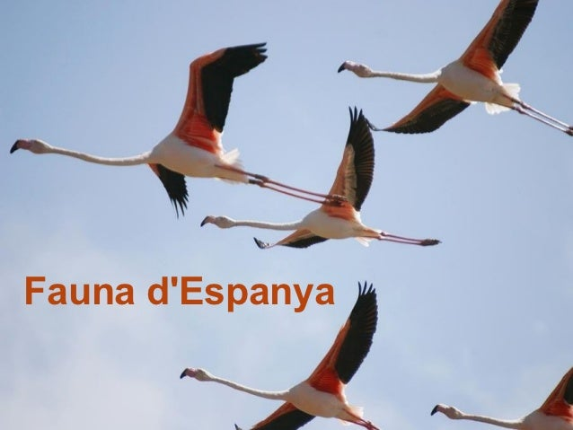 Fauna dEspanya