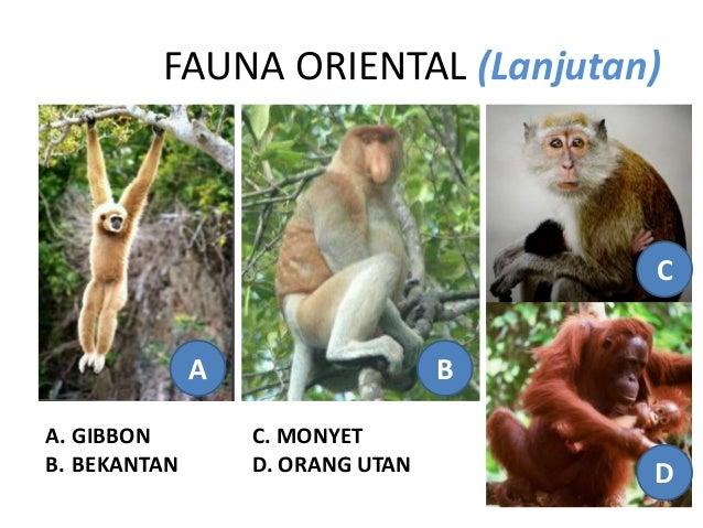 42 Gambar Hewan Daerah Oriental Terbaik