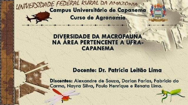 • Analisar e identificar a biodiversidade de macrorganismos existentes no solo.