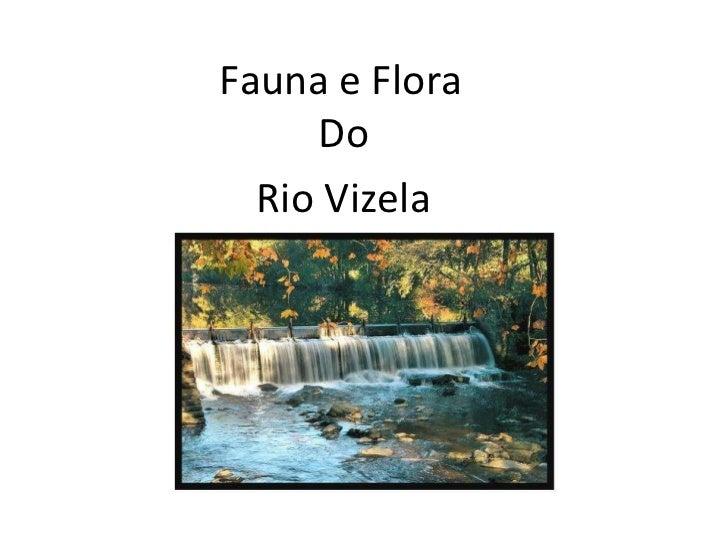 Fauna e Flora Do Rio Vizela