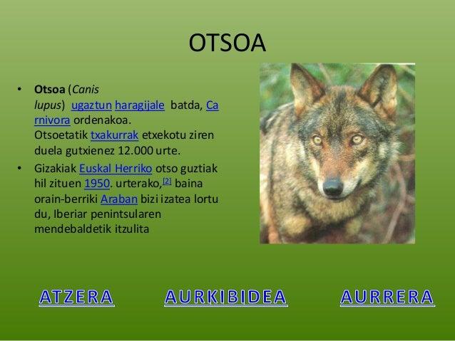 Fauna iberikoa sl Elexalde Slide 2