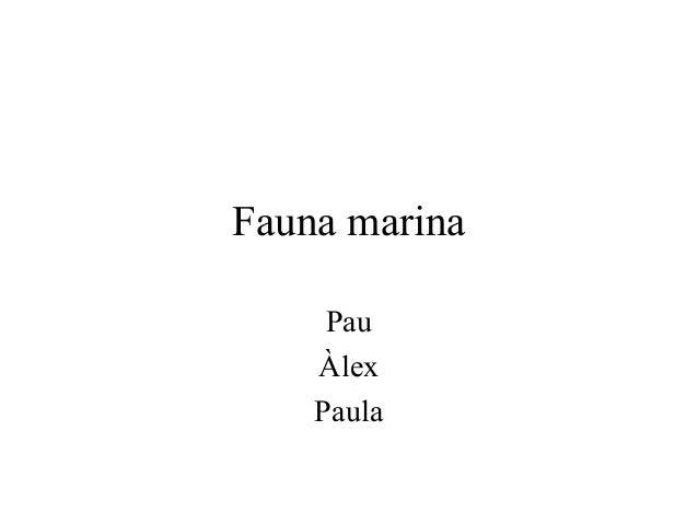 Fauna marina     Pau    Àlex    Paula