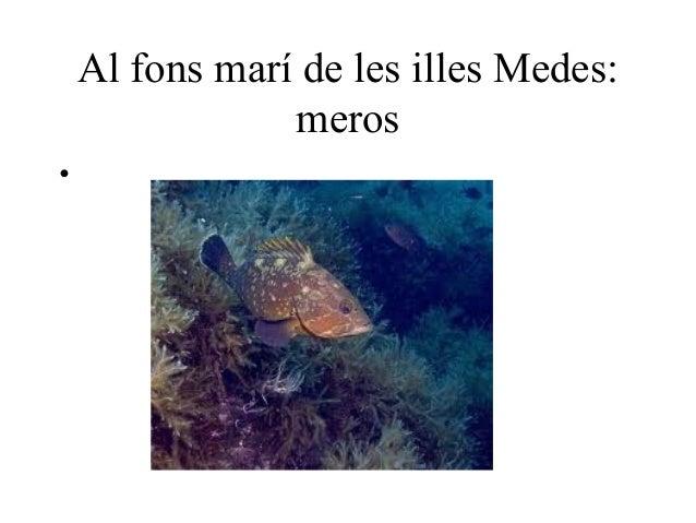 Al fons marí de les illes Medes:                meros•