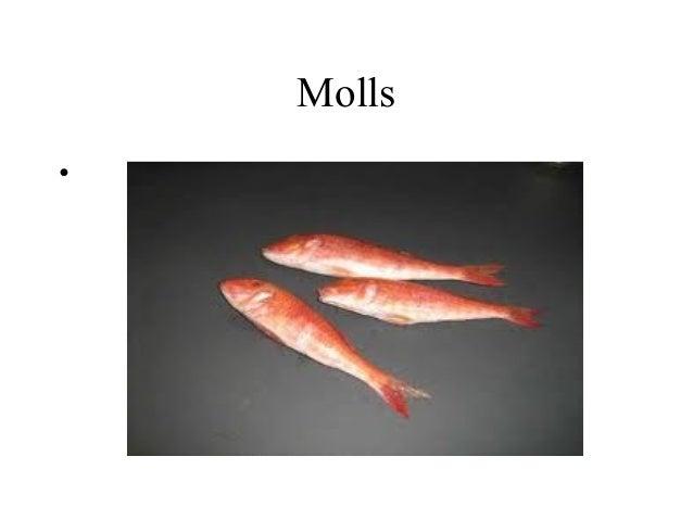 Molls•