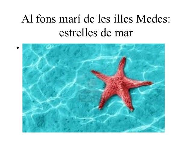 Al fons marí de les illes Medes:            estrelles de mar•