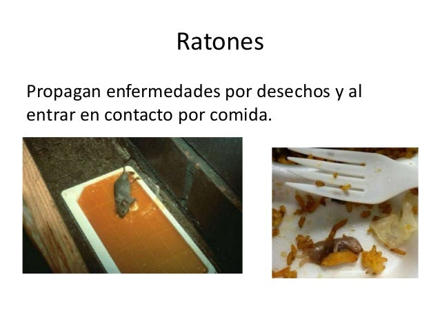 Fauna nociva en alimentos.