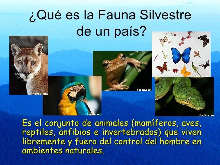 ¿Qué es la Fauna Silvestre        de un país?Es el conjunto de animales (mamíferos, aves,reptiles, anfibios e invertebrado...