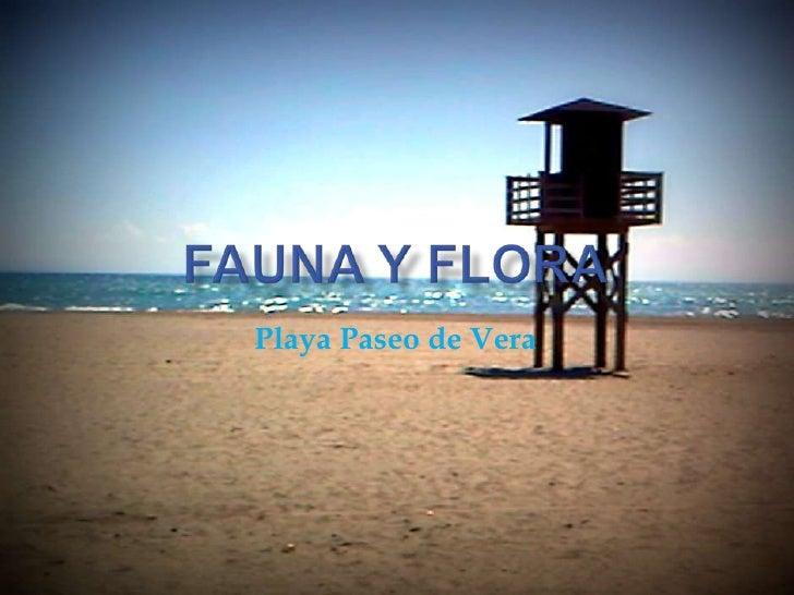 Fauna y Flora <br />Playa Paseo de Vera<br />