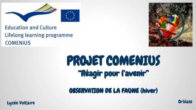 """OBSERVATION DE LA FAUNE (hiver) PROJET COMENIUS """"Réagir pour l'avenir"""" Lycée Voltaire Orléans"""