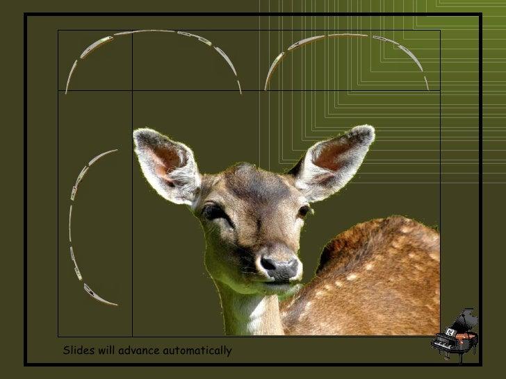 Fawns, Deers, Bucks Slides will advance automatically