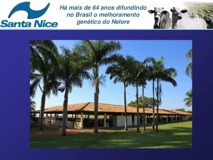 Há mais de 64 anos difundindo  no Brasil o melhoramento     genético do Nelore