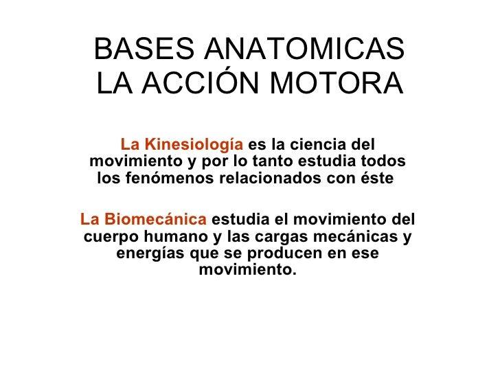 BASES ANATOMICAS LA ACCIÓN MOTORA La Kinesiología  es la ciencia del movimiento y por lo tanto estudia todos los fenómenos...