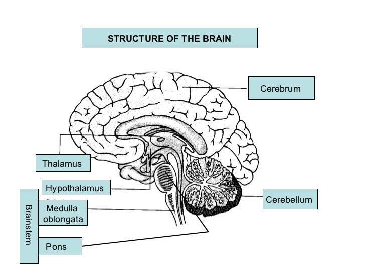 Brain form timiznceptzmusic brain form ccuart Image collections
